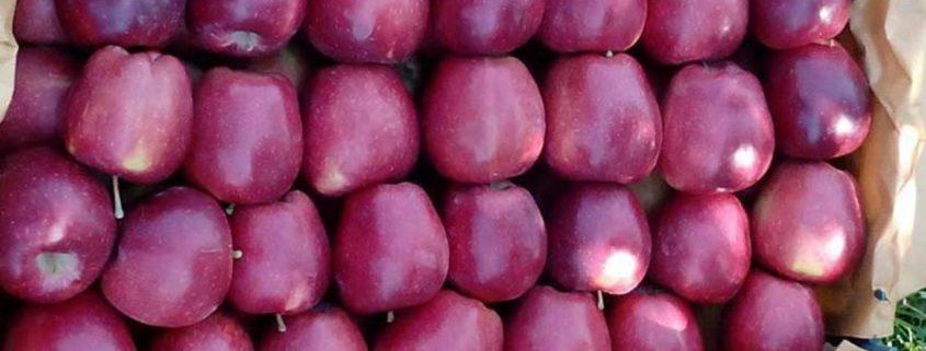 سیب گلدن رندرز