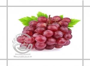 انگور فخری