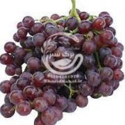 نهال انگور لابروسکا