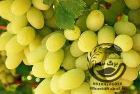 نهال انگور کانمریا
