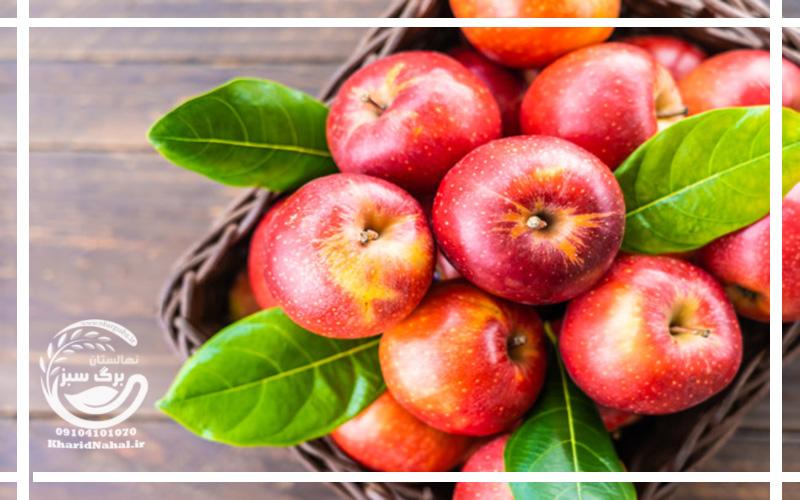 خرید نهال سیب