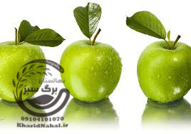 نهال سیب ترش