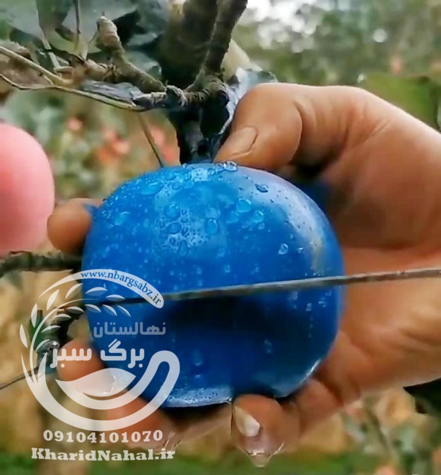 نهال سیب آبی