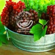 نهال انگور یاقوتی